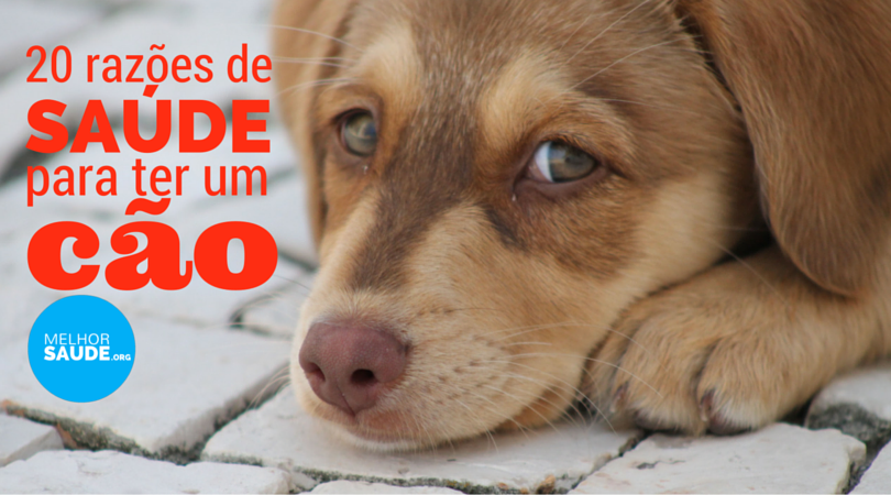 Despedida De Um Cão: PORQUE FAZ BEM TER UM CÃO?